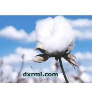 长绒棉因纤维较长而得名,又称海岛棉