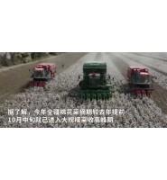 """中国棉花行业将设立""""自己的标准"""""""