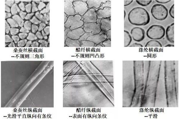 醋酸纤维与蚕丝、涤纶丝的结构对比